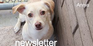 ABC Email Newsletter Signup