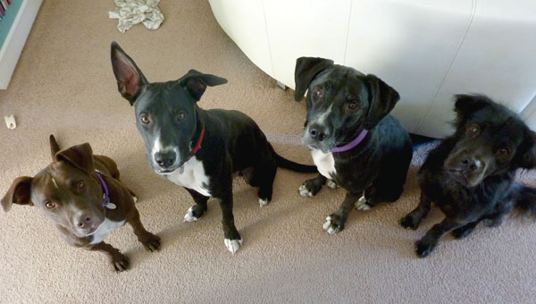Coco, Miles, Lilly, and Claire were all adopted or fostered from ABC