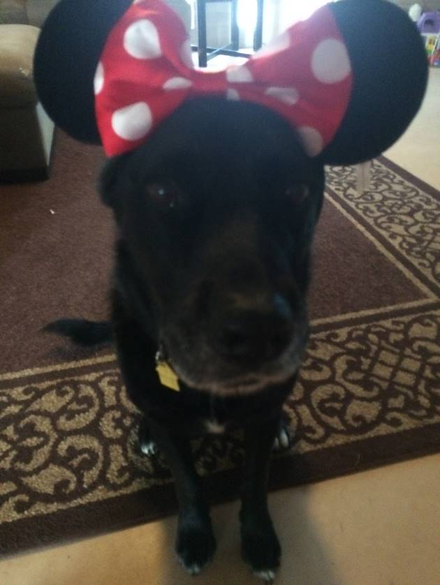 Elsa dressed up as Minnie Mouse for Halloween