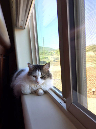 Sprite relaxing by her favorite window