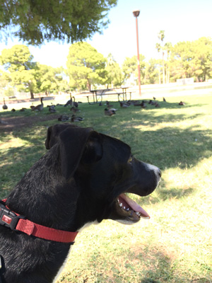 Miles enjoyed meeting the geese