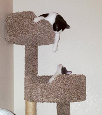 Peppermint & Tipper enjoying their cat tree together